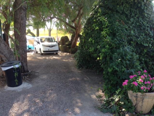 San Lorenzo Hiding in the Trees